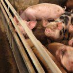 Geruchsmessungen Nutztierhaltung